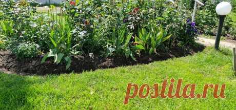 Сделали бесплатное ограждение газона от клумб как в Английских садах. Нужна только лопата и час времени   MyFlowersDream   Яндекс Дзен