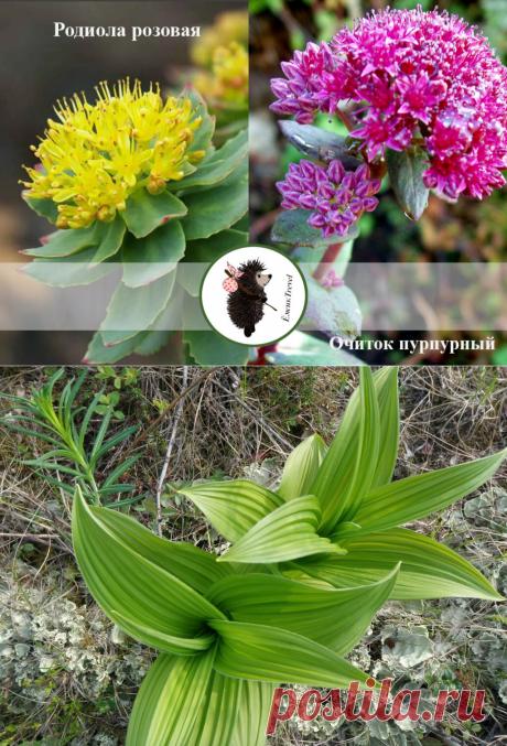 Как определить ядовитые растения в походе. Рассказываю рабочие моменты | ЁжикTravel | Яндекс Дзен