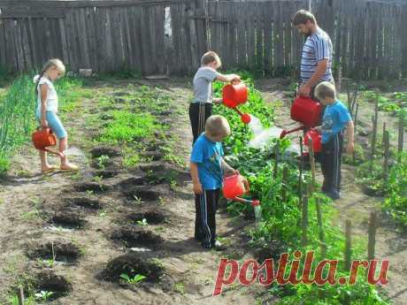 Шпаргалка для дачника: поливаем огород   Дачный участок