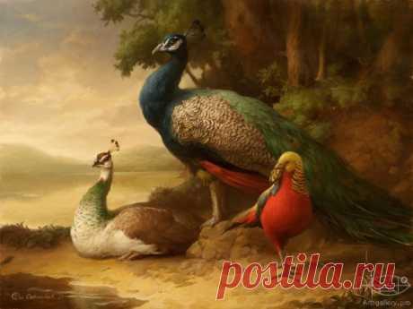 Картинки для декупажа с фазанами.