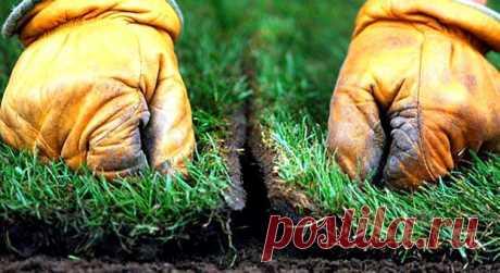 Рулонный газон своими руками