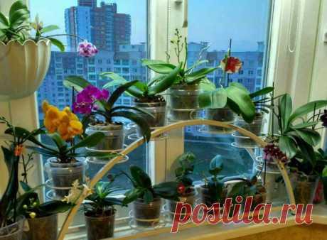 9 основных правил по уходу за орхидеями в домашних условиях