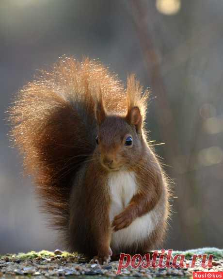 Фото: Ну, Здравствуй, Это Я.... Любитель BoNik. Фото животных - Фотосайт Расфокус.ру