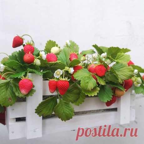 Photo by Ольга Щербакова on May 09, 2020. На изображении может находиться: цветок и растение