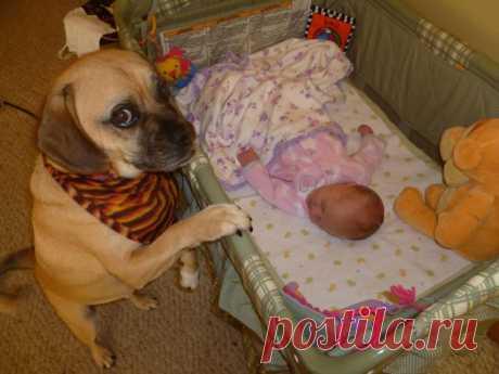 Когда они оставили ребенка в комнате с собаками, то и представить не могли, ЧЕМ это обернется! | Golbis