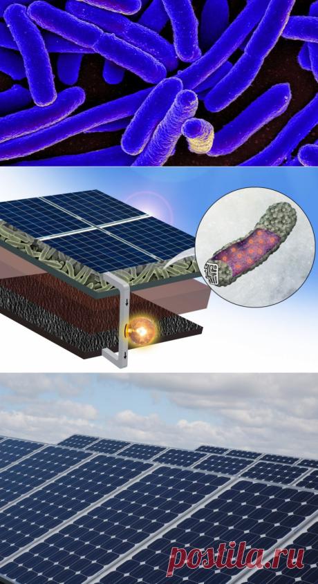 Улучшить работу солнечных панелей в пасмурные дни помогут бактерии! - Экологический дайджест FacePla.net