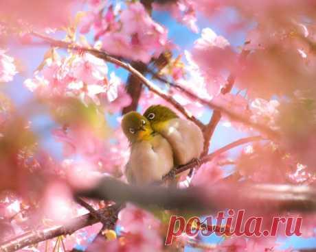 Весна! Весна! Сияет высь небес, И тучек ветер водит хороводы! Весна - пора любви, пора чудес, Надежд и пробуждения природы...  Чарует воздух свежестью своей, И птичий хор щебечет упоённо! Земля дурманит запахом полей, И раздаёт букетики влюблённо!  Весна! Весна! Заветная пора! Пора чудес! Пора любви, мечтаний! Свиданий и признаний до утра, И искренних и ложных обещаний...  Вдыхаю полной грудью волшебство, Что щедрою рукой весна дарует. И воробей на крыше, и тепло, Которое ...