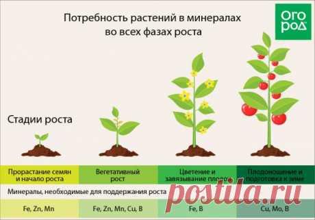 Удобрения в хелатной форме – что это такое и чем они полезны для растений | Удобрения и стимуляторы (Огород.ru)