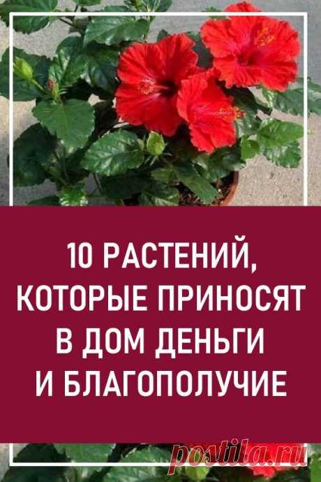 Эти 10 растений приносят в дом деньги и благополучие. Они должны быть в каждом доме!
