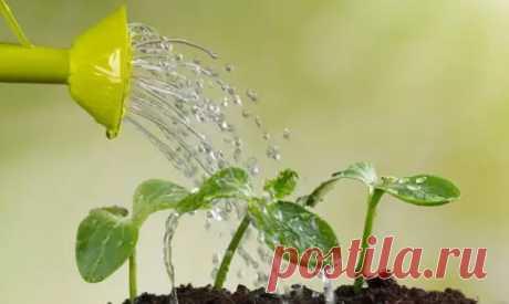 Как правильно поливать комнатные растения - Цветочки - медиаплатформа МирТесен