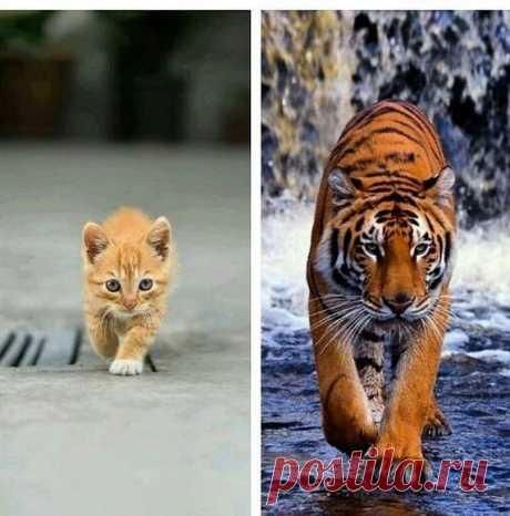 Размеры разные, а походки одинаковые)))
