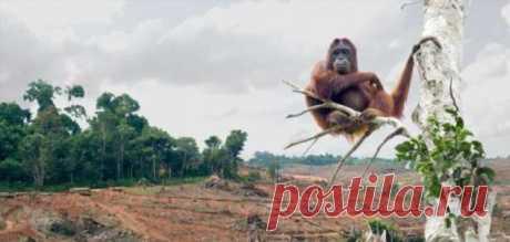 Уничтожение лесных насаждений во всём мире способствует распространению вирусов | Краше Всех