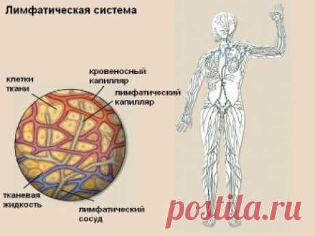 Лимфатическая система, о чем не знают 90% врачей