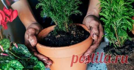 После такой подкормки комнатные растения растут как на дрожжах - Образованная Сова