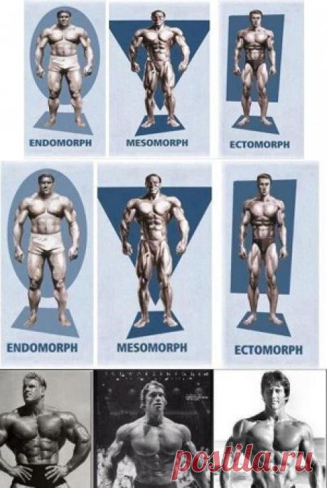 Типы телосложения мужчин | Sport My Way | Sport - My Way