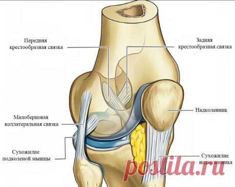 Как лишний вес сказывается на ваших коленях. 3 Простые упражнения для укрепления сустава.   health and beauty   Яндекс Дзен