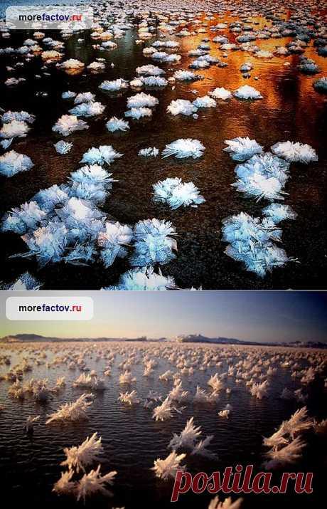 Ледяные цветы Арктики – редкий природный феномен