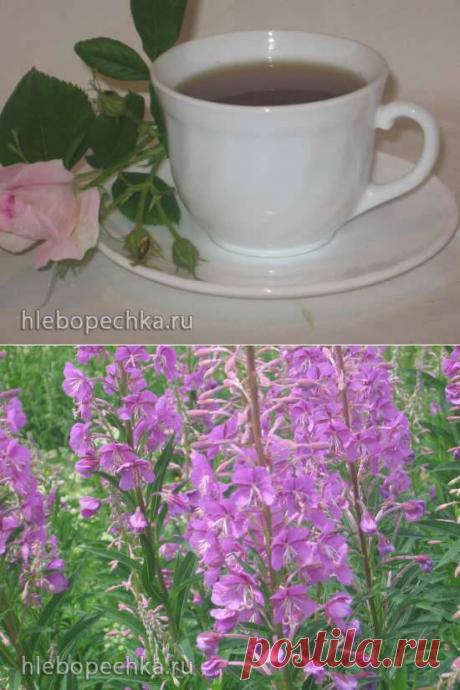 Иван-чай (ферментация листьев кипрея) - мастер-класс -