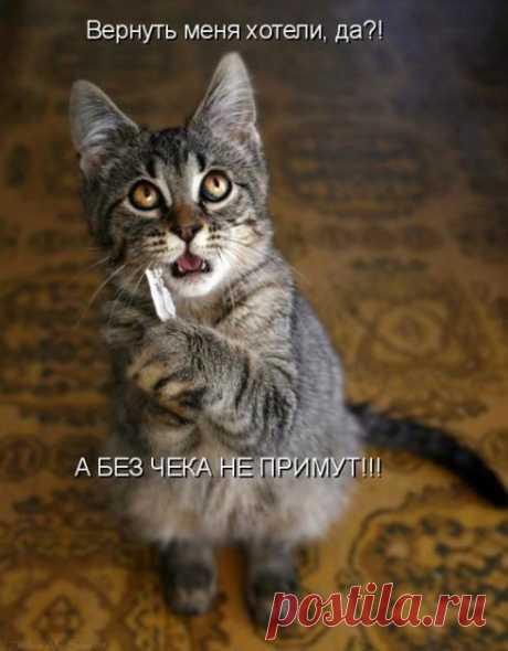 Смешные картинки про животных, с надписями (36 фото) ⭐ Забавник