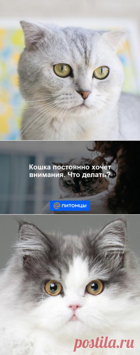 Кошка постоянно хочет внимания. Что делать? - Питомцы Mail.ru