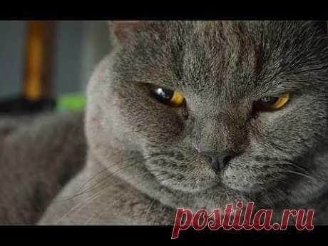 Обаятельные кошки. | ВИДЕОСМАК