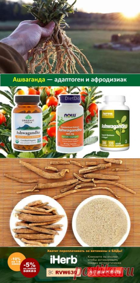 Ашваганда: лечебные свойства и противопоказания и как принимать
