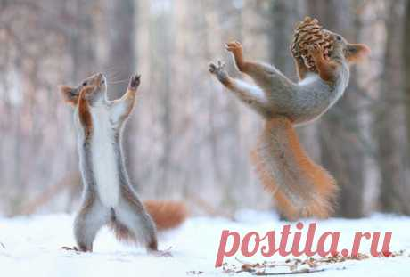 As the Voronezh squirrels have a good time – you look in a photoshoot of the talented Russian photographer Vadim Trunov