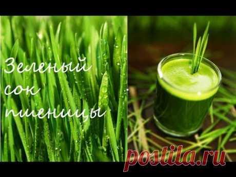 Зеленые ростки пшеницы. Витграсс - YouTube
