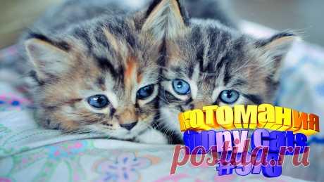 Вам нравится смотреть видео про смешных котов? Тогда мы уверены, Вам понравится наше видео 😍. Также на котомании Вас ждут: видео кот,видео кота,видео коте,видео котов,видео кошек,видео кошка,видео кошки,видео о котах, видео про смешные, видео смешная кошка, кот видео, кошачьи приколы, кошка, кошки 2020, приколы котов, про котов, про кошку, смешное, смешные видео про животных, смешные кошки видео до слез