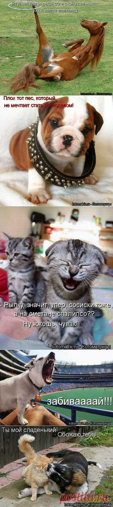 Свежие котоматрицы на понедельник (80 картинок) » Ex.BY - фотоприколы, фото девушек и животных