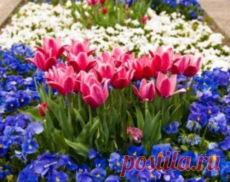 9 привлекательных растений, цветущих в мае