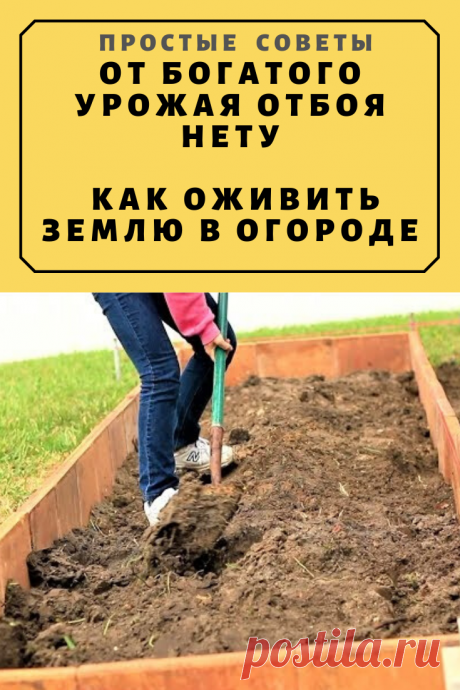 От богатого урожая отбоя нету. Как оживить землю в огороде – Простые советы