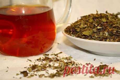 Русский чай: пошаговая инструкция заготовки иван-чая