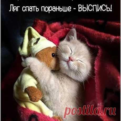 Photo by Natalia Elkhova on March 12, 2020. Image may contain: cat, text that says 'будь как все, иди против системы! ляг спать пораньше выспись!'