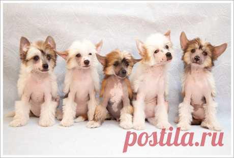 (1) Gallery.ru / Фото #1 - щенячья жизнь - Vladikana
