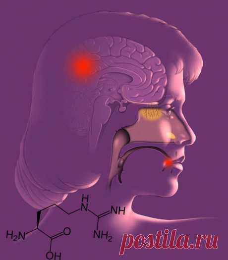 Что провоцирует герпес и болезнь Альцгеймера / Будьте здоровы