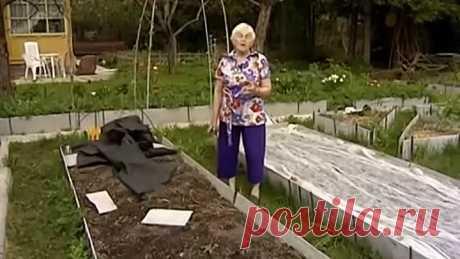 Галина Кизима - Огород без хлопот