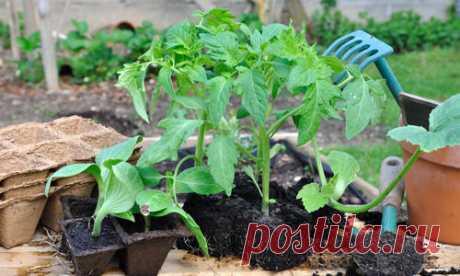 La lección 1. Cultivamos las plantas sanas: la profiláctica de los problemas posibles