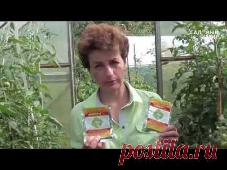 """Болезни томатов.Бурая пятнистость томатов. Сайт """"Садовый мир"""""""