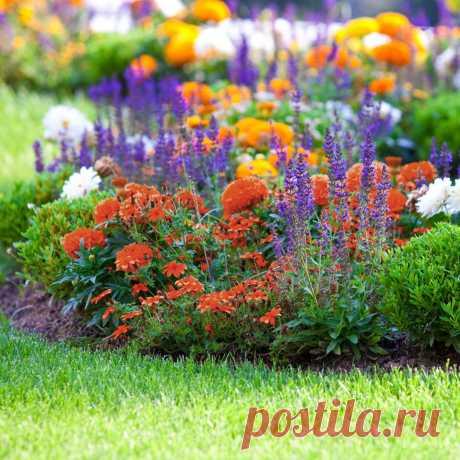 Цветник на солнечном участке — Ботаничка.ru