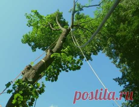 Безопасное удаление опасных деревьев. Работаем по всей Беларуси.