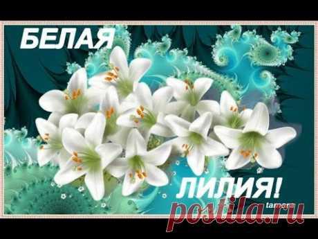БЕЛЫЕ ЛИЛИИ--Ярослав Евдокимов - YouTube