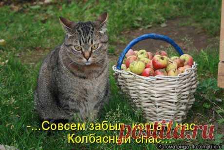 котоматрица | Записи с меткой котоматрица | Поиск нужной и полезной информации