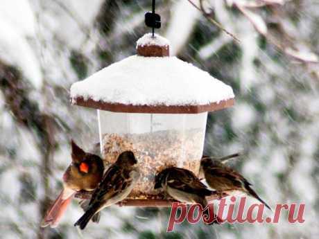 Идеи кормушек для птиц С приходом зимы нашим пернатым друзьям становится трудно найти корм для пропитания. Мы, как их старшие братья, можем позаботиться о них и сделать кормушки.У нас дома есть разные подручные материалы, и...