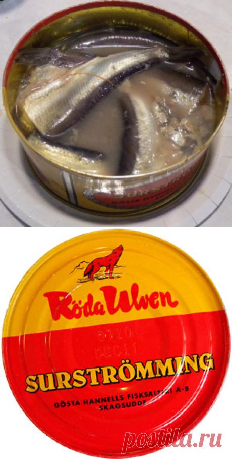 Сюрстрёмминг: шведское лакомство   Четыре вкуса