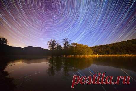 Звездное небо над рощей болотных кипарисов, Краснодарский край. Автор фото: Егор Никифоров. Добрых снов.