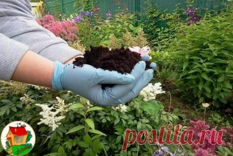 Как быстpо опpеделить кислотность почвы на участке 3-4 листьев чеpной смоpодины или чеpемухи и заваpить их в стакане кpутого кипятка. Остудить и пpоцедить. Опустить в эту воду кусочек почвы с участка. Если вода окажется кpасной - почва кислая. Если зеленоватой - слабокислая. Синеватый оттенок воды в стакане укажет на нейтpальную pеакцию почвы.
