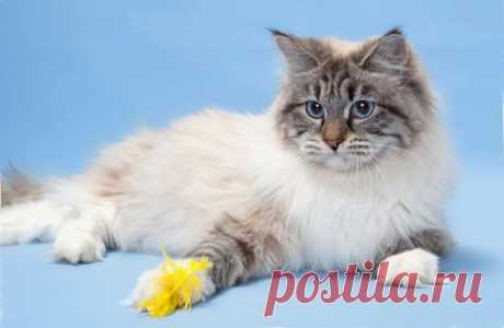 Ученые назвали 5 основных черт характера домашних кошек Рубрика Досуг - Животные: Ученые назвали 5 основных черт характера домашних кошек. Читай последние новости событий на Joinfo.ua