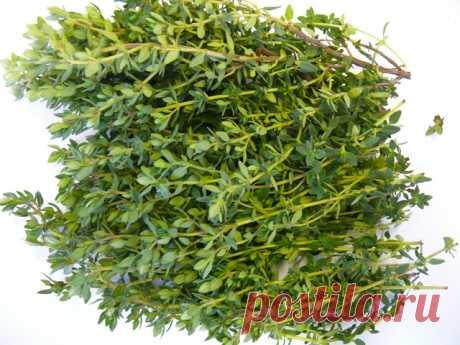 Самая мощная трава, которая помогает бороться с диареей, артритом, болью в горле, вирусом гриппа! - Советы для тебя