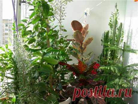 Зимний сад в доме. Советы новичкам Дорогие читатели, если вы решили, что маленький зеленый оазис или зимний сад в доме, способен украсить ваш интерьер и пополнили ряды поклонников находящегося сейчас на пике моды увлечения, подумайте, за что в первую очередь ценим мы домашние растения...